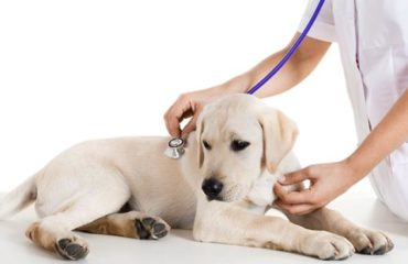 Veterinarian is helping our pets